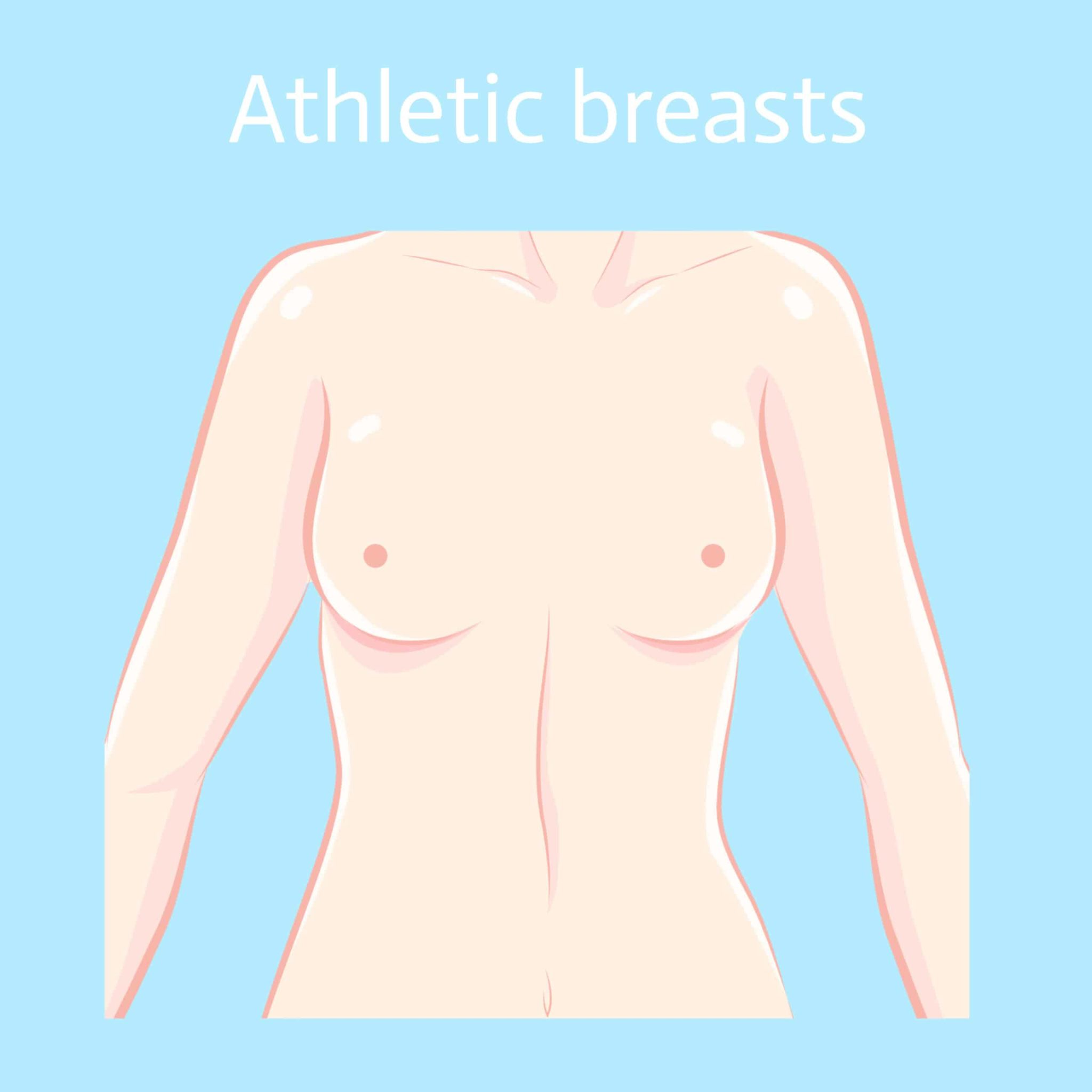 athletic breasts