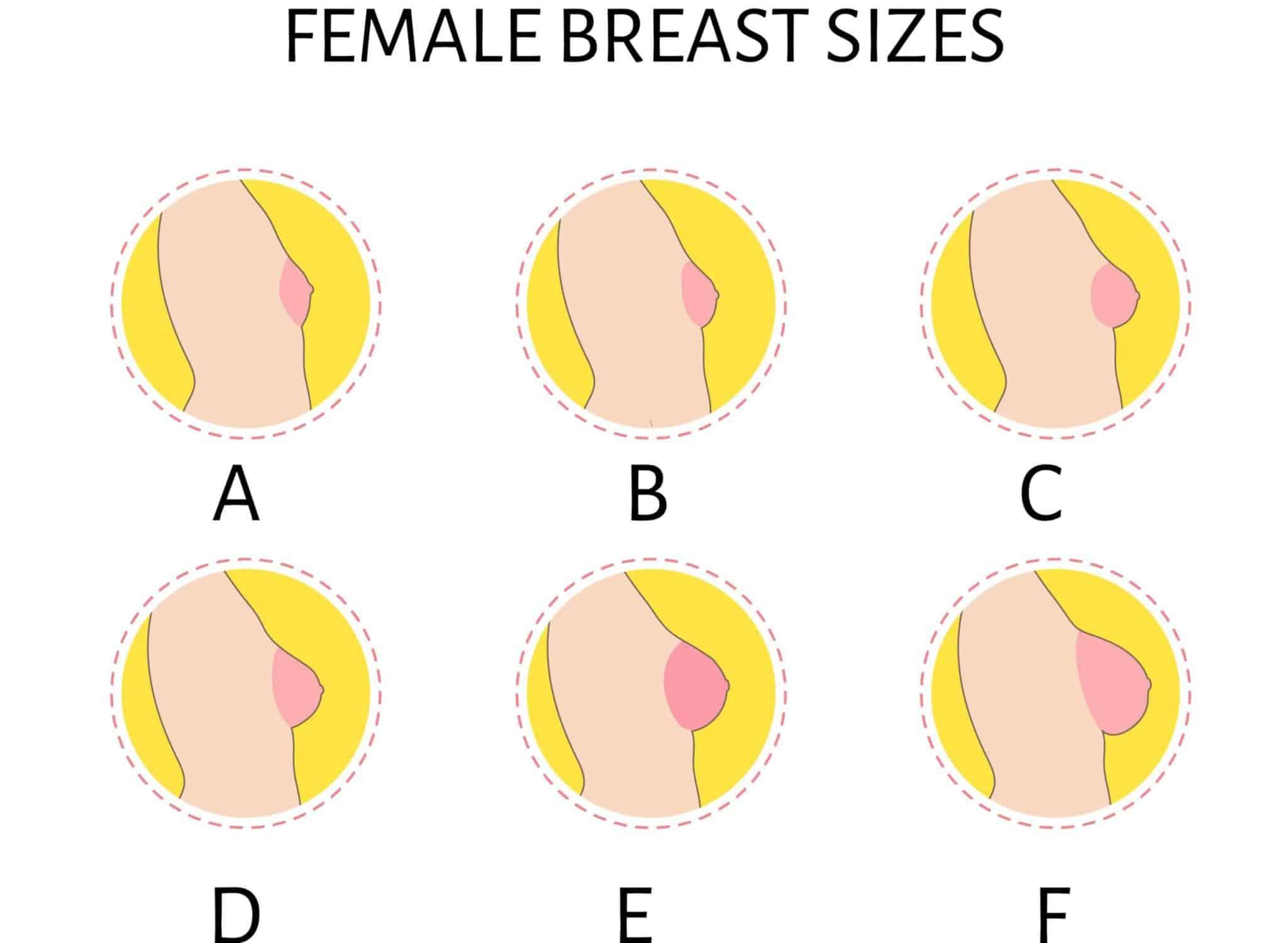 female breast sizes